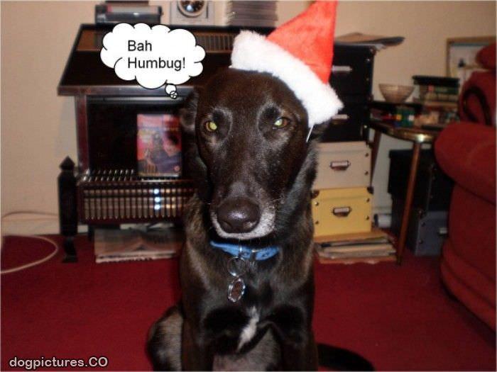 Bah Humbug Dog Pictures