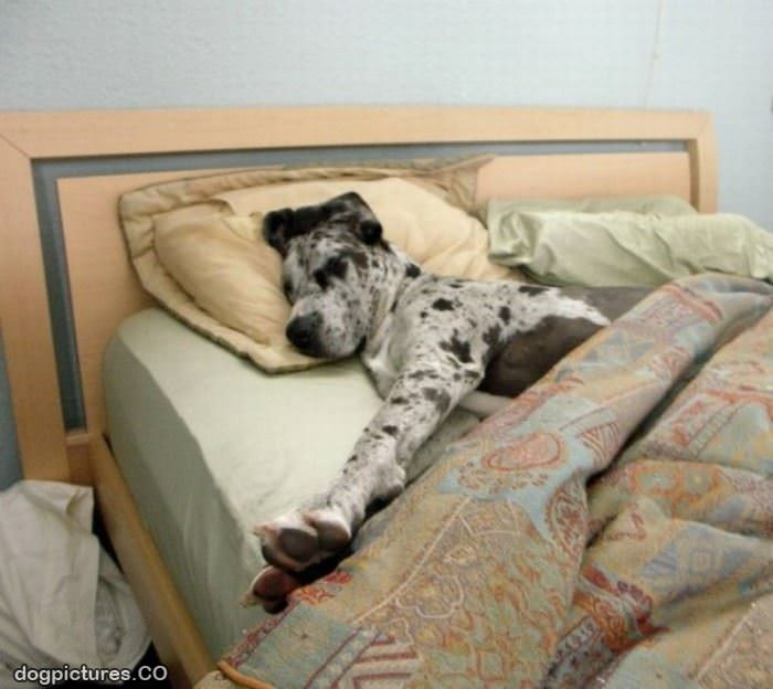 Comfy Beds For Old Dogs