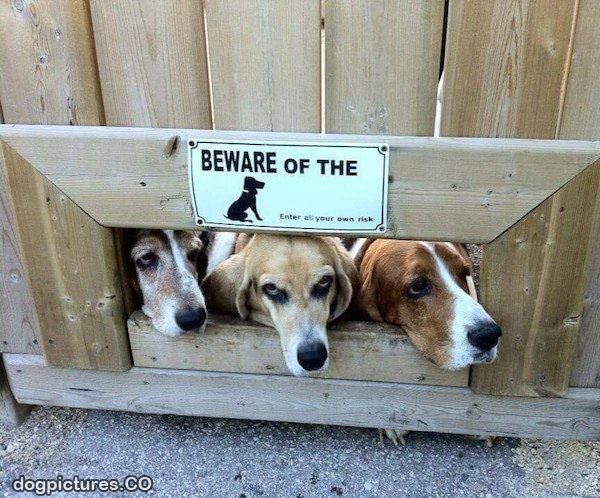beware of these dogs