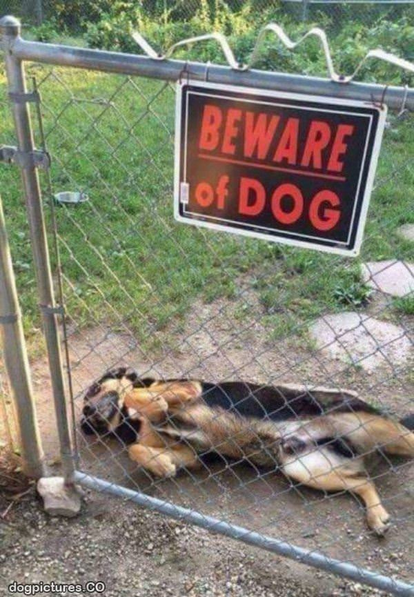 beware of this dog