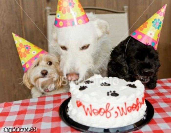 funny happy birthday dog cake-#25