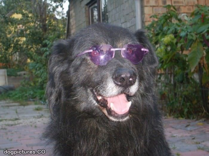 cool eyeglasses ffsr  cool eyeglasses