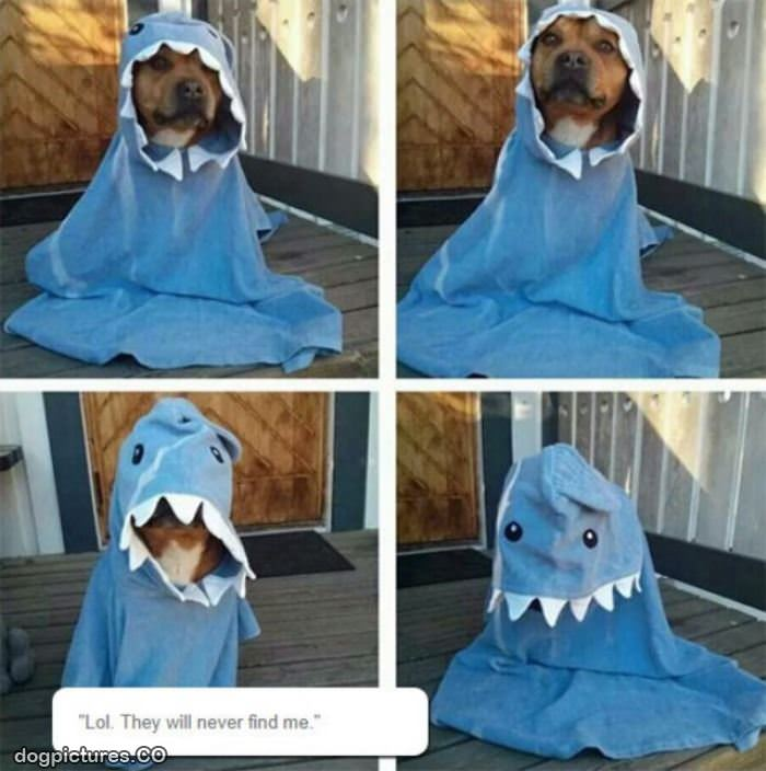 & dog shark costume - Dog Pictures