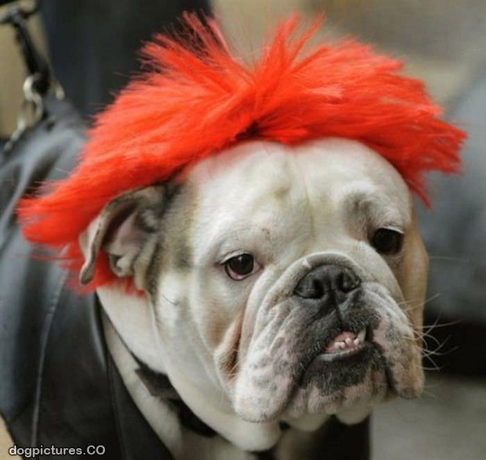Red Dog Wig