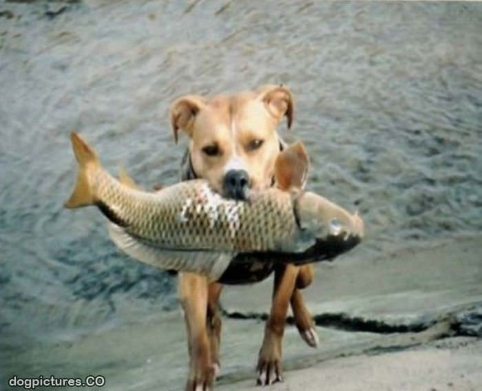 Fishing dog pictures for Fish for dogs