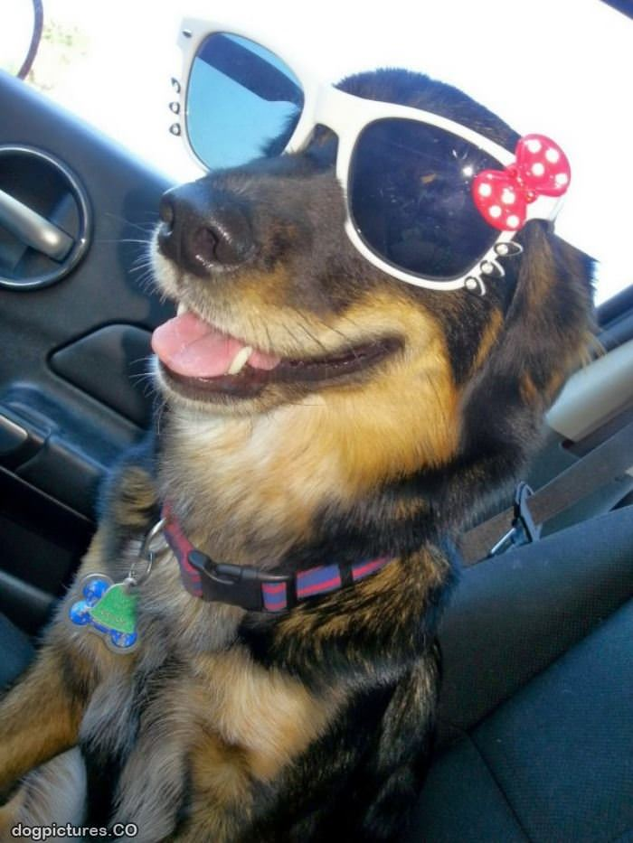 got my cool dog glasses dog pictures my cool car by mpdigitalart on deviantart
