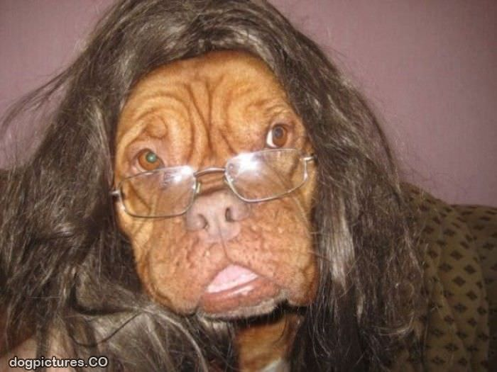 Funny Dogs with Wigs
