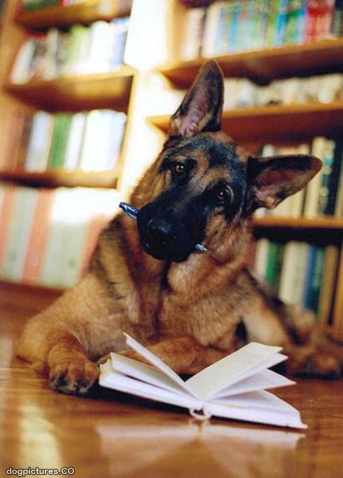 http://www.dogpictures.co/pictures/Homework_Dog.jpg
