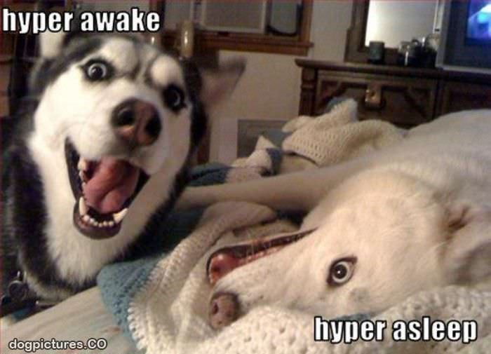 hyper dogs - Dog Pictures