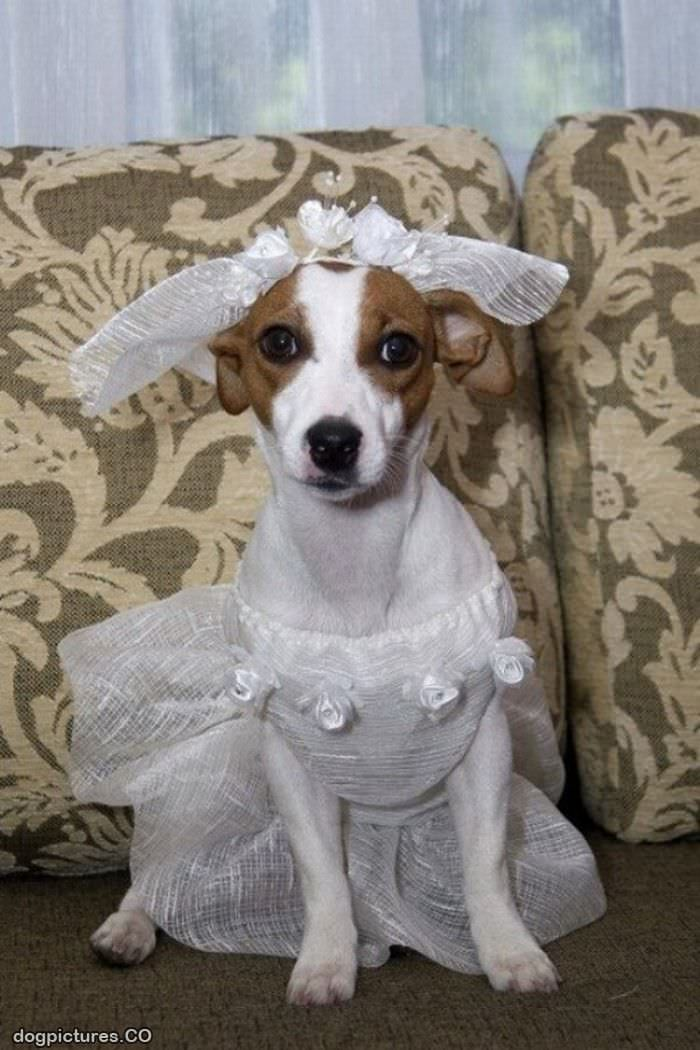 In My Wedding Dress