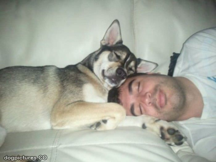 its nap time Dog Pictures