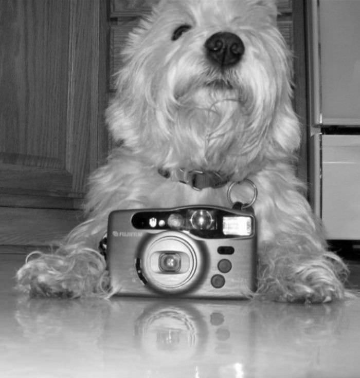 let me take your picture