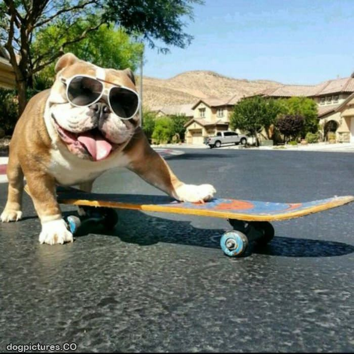lets go skateboard