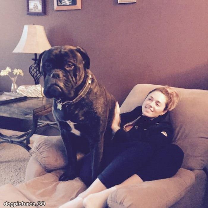 Last Chance Dog Rescue Kent