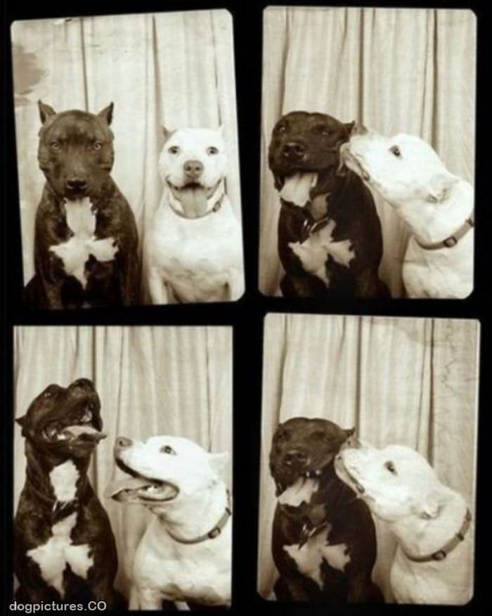 photo booths dogs
