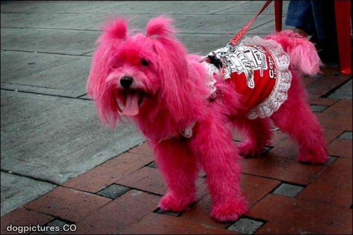 pink dog - Dog Pictures: www.dogpictures.co/pictures/pink_dog.htm