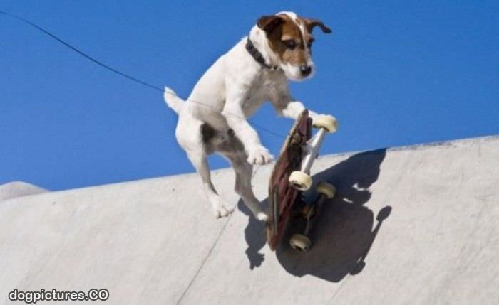 Skateboarding Dog Video
