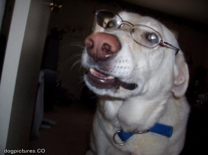 smart looking dog