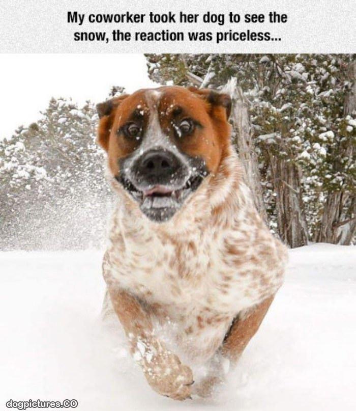 friday dog funny