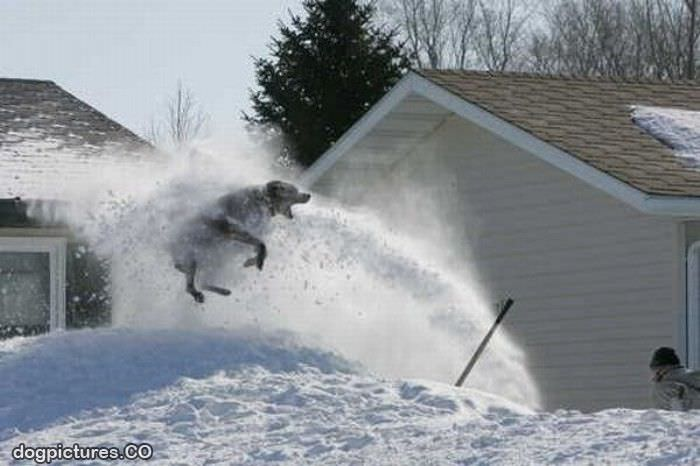 snowblower dog