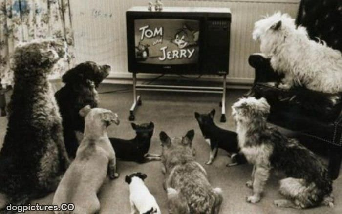 tom and jerry time