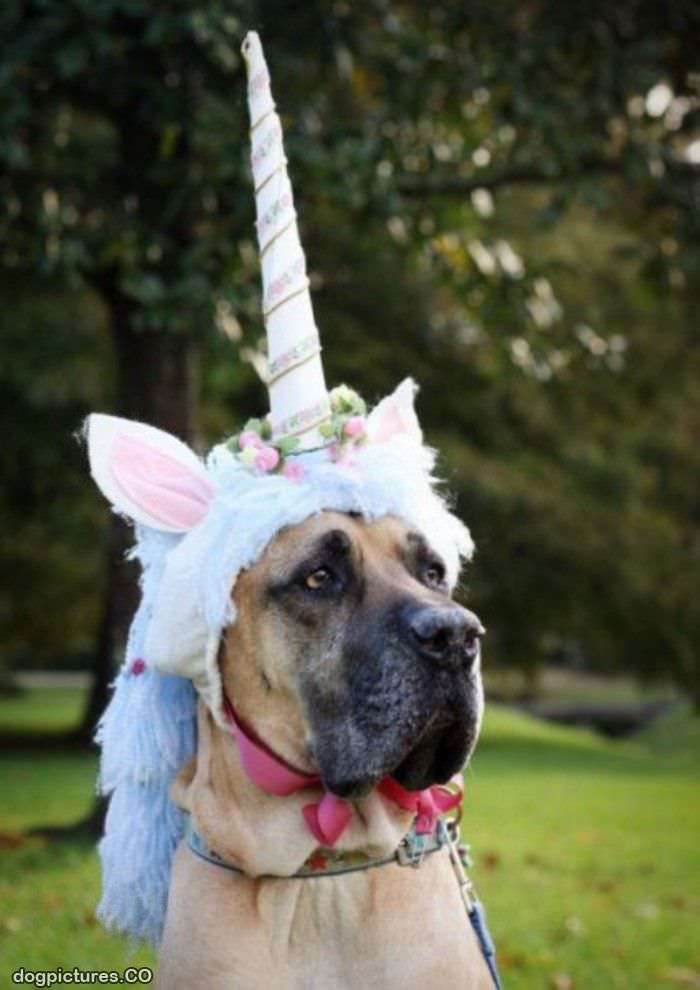 unicorn dog