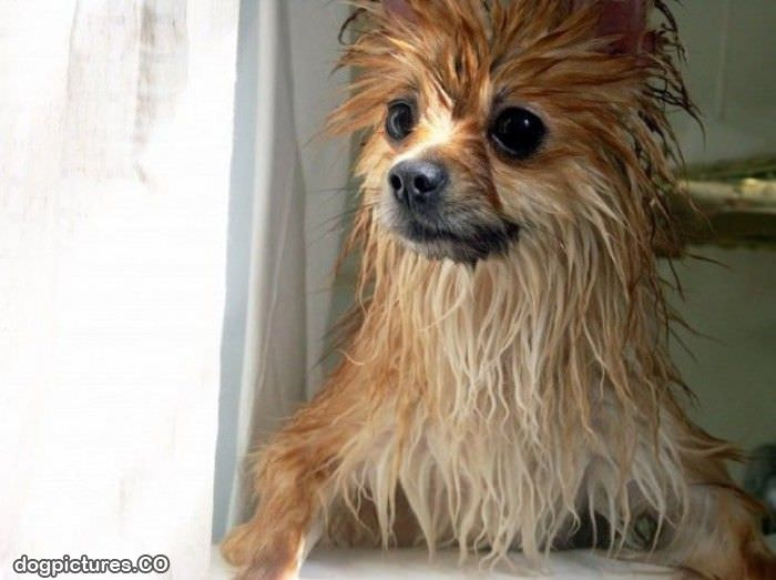 Funny Wet Dog