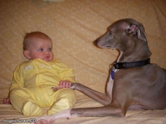 Funny Animals and Children