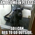Can I Come In